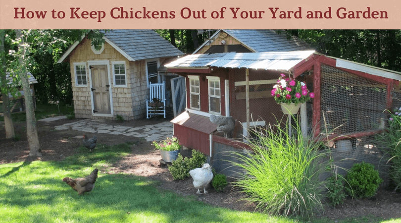 How to Keep Chickens Out of Your Yard and Garden