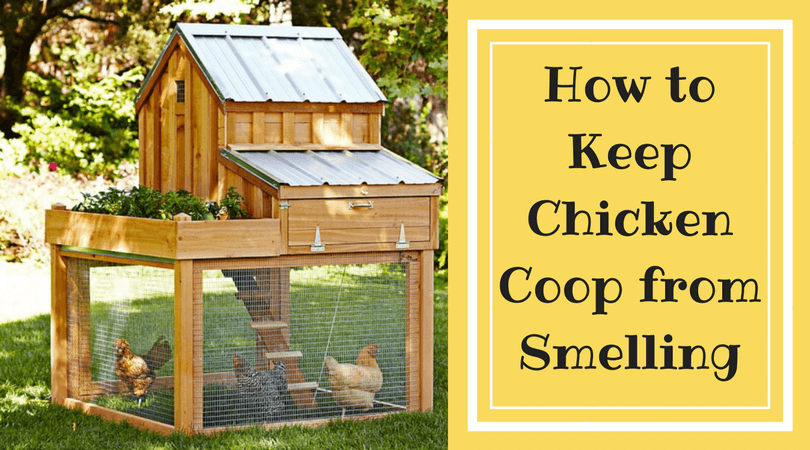 How to Keep Chicken Coop from Smelling